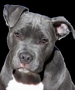 dog-2438803_640